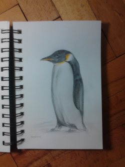 "Day 32: ""Penguin"", pencil on paper, 11cm x 16cm (available)"