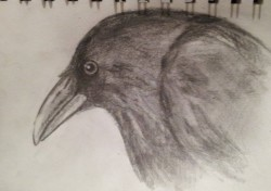 "Day 97: ""Raven"", pencil on paper, 11cm x 17cm (available)"